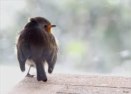 Mini Mini Bir Kuş Donmuştu Şarkısı